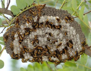 蜂房的功能与主治