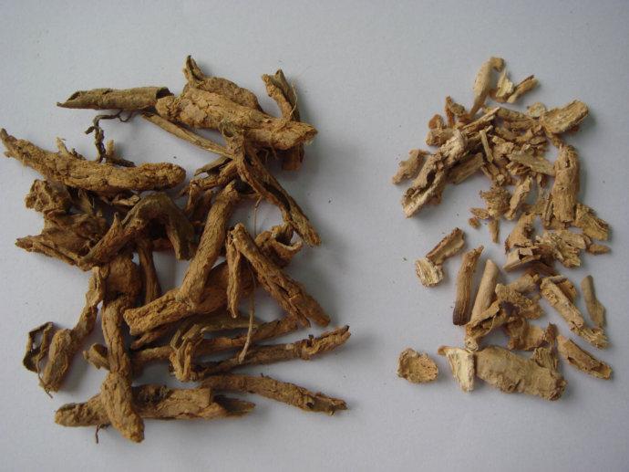 地骨皮的功能与主治