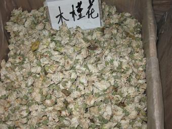 木槿花的药用价值