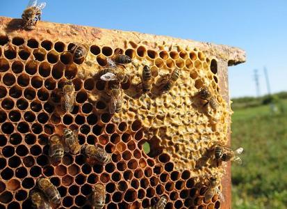 蜂房的食用方法