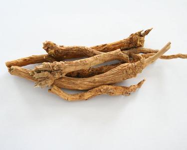黄芩的图片
