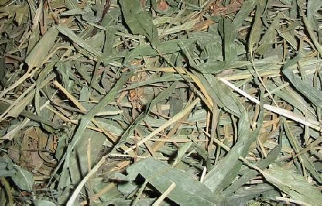 竹叶的图片