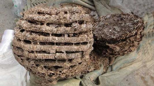 蜂房的图片