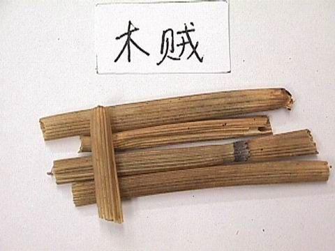 中药材木贼草图片