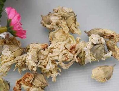 中草药木槿花图片